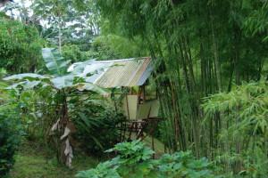 Dschungelwochenbett