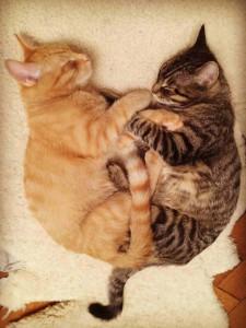 Katzen-Duett