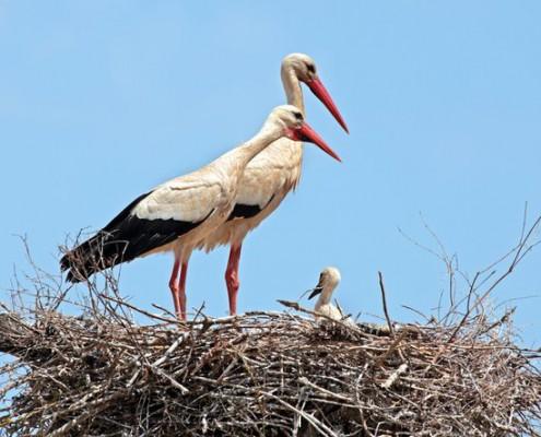 Natürliche Geburt - vom Aussterben bedroht?
